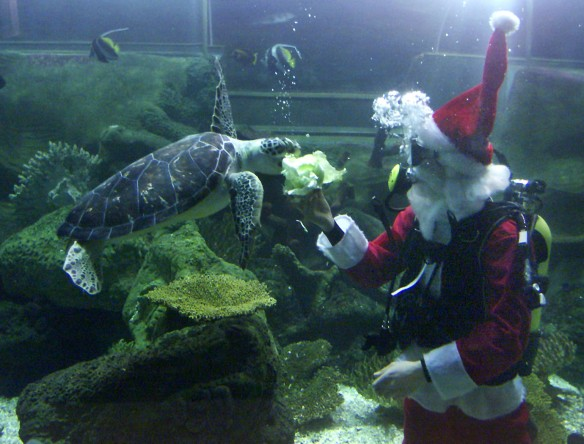 Father Christmas delivers a Christmas treat to Friday the turtle at the Bournemouth Oceanarium. photograph by Hattie Miles